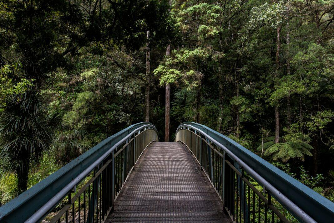 ekologie, příroda, udržitelnost